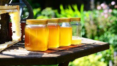 Photo of Honey Benefits For Health