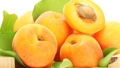 Photo of Include Apricot in your diet to stay fit and healthy