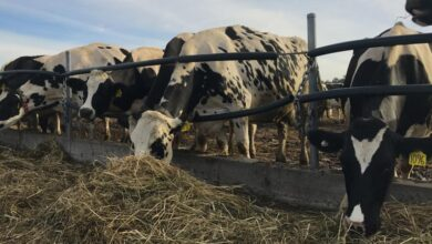 Photo of Common Mistakes to Avoid When Storing Cattle Feed