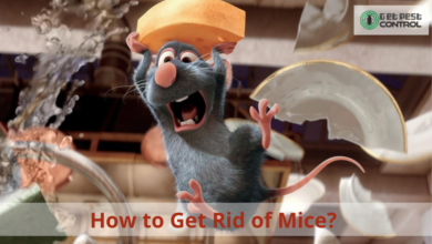 Photo of How to Get Rid of Mice?