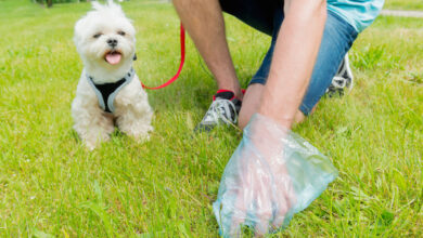 Photo of Should You Tackle Pet Waste Yourself?