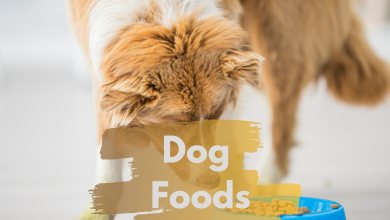 Photo of Foods That Your Puppies Love to Eat
