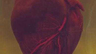 heart valve