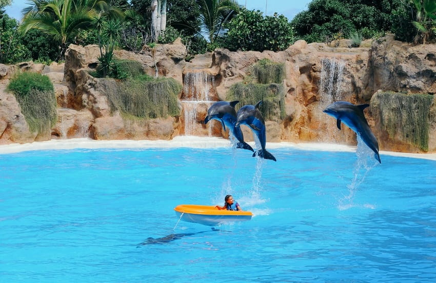 Is Swimming with Dolphins a Kid-Friendly Activity