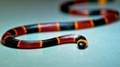Photo of Snake Health Tips For Your Pet Snake