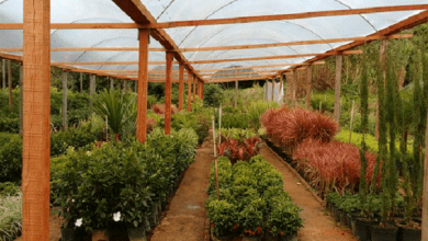 Purpose Of Growing Plants In The Greenhouses