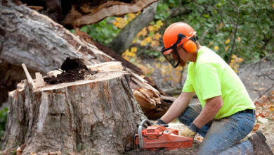 Photo of REASONS: Why you should hire a Tree Removal Company