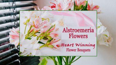 Alstroemeria Flowers- Heart Winning Flower Bouquets