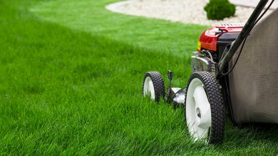 Photo of BENEFITS AND DISADVANTAGES OF LAWN CARE SERVICES