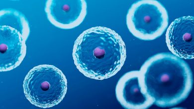 Photo of Stem Cell Research: Types, Uses, and Examples
